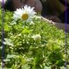 garden-heart
