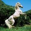 mOuaa-et-les-chevaux