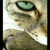 love-de-felins