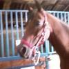 passion-le-cheval-du86