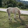 chevaux-de-reve