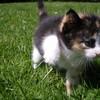 kittycat08