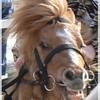 horses-of-bucarest