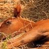 x-So-Horses-88-x