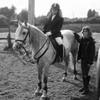 X-hendremael-horses