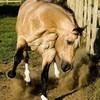 Torima-Horses