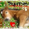 mapassion-des-chevaux