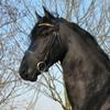 la-fic-horses-3