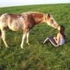 o0o-miss-horses-o0o
