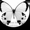 ephemeralbutterfly