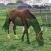 materiel-equitation76