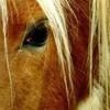 lovehorse49