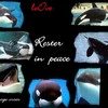 hommage-orca