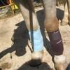 Horse-Riding-Mornay