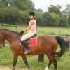 my-sweet-horses
