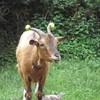animals5594