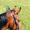 chevalblog34