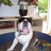 AstonBulldog