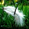pitite-plume-en-herbe