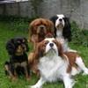 nos-chiens64-33