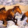 cricri-chevaux62
