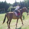 une-histoire-de-horse