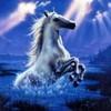horse2007