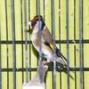 vogelcentre