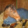 chevauxdu71
