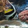 ma-passion-les-aquariums