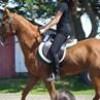 tripe-horses