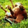 lov3-horse-pony