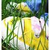 titeperlepink