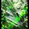 oliviagunit