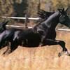 chevaux16
