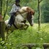les-chevaux-du-manege
