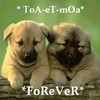 ToA-eT-mOa-FoReVeR