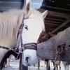 le-relais-equestre-love