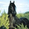Ww-Horse-Passion-wW