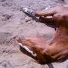 x-chevaux-06-x