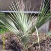 palmierpoilu0302