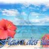 fleurs-d-iles