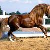 Yaoi-Equitation
