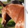 equine-photographie