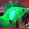 poisson-vert95