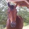 mon-tit-cheval