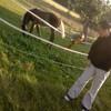 Horses-Liifee
