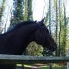 horsecompet33