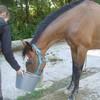 horsewoodlife