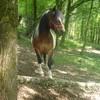 love-my-horses-x3